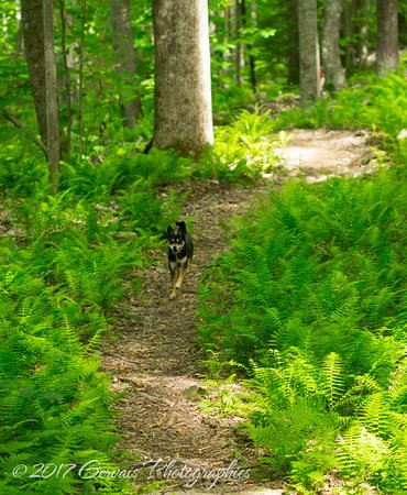 Wise, VA: Hiking a trail on High Knob with our furry friend!