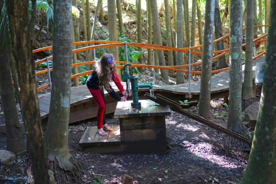 Tamborine Mountain Botanic Gardens: water pump activity of the Sooty owl walk