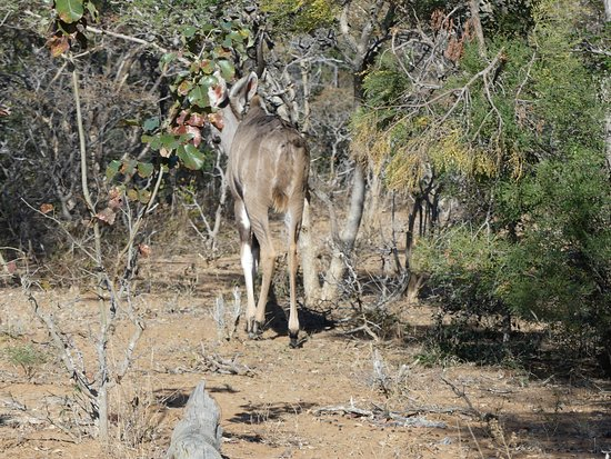 Marakele National Park: photo1.jpg
