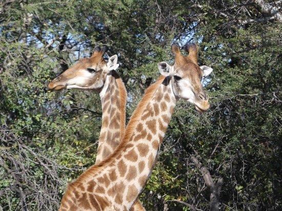 Marakele National Park: photo2.jpg