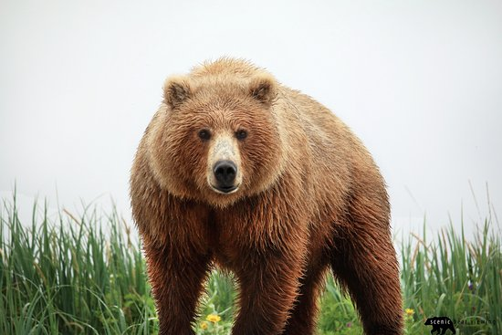 Homer, AK: Hey Bear! We love this photo that the owner Martin took!