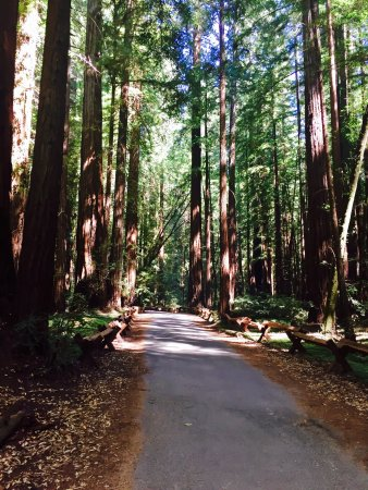 Armstrong Redwood State Reserve : photo0.jpg