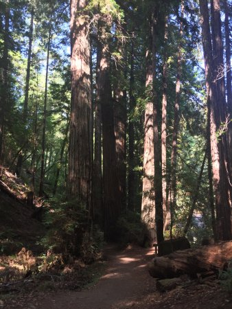 Armstrong Redwood State Reserve : photo3.jpg