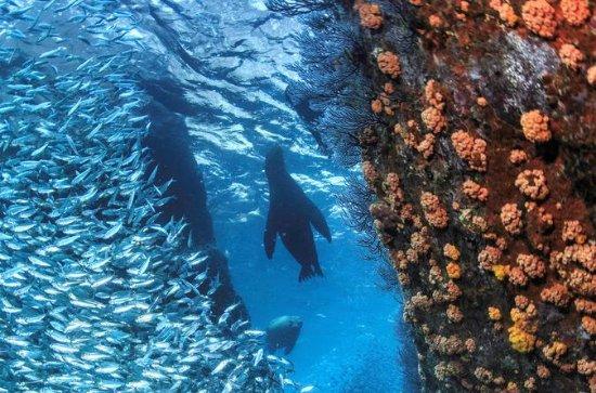 Snorkeling Adventure at Espiritu...