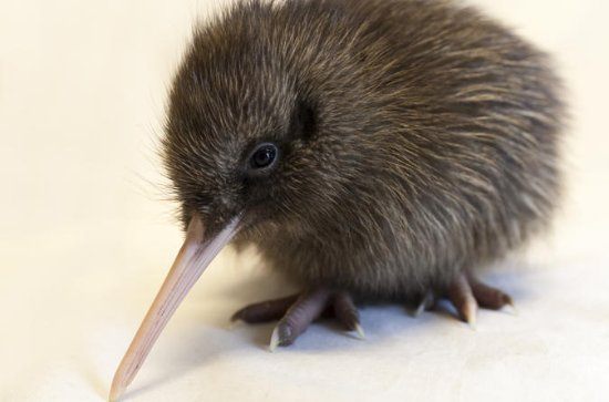Franz Josef Wildlife Center Adm mit ...