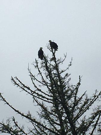 Garibaldi, OR: Eagles!
