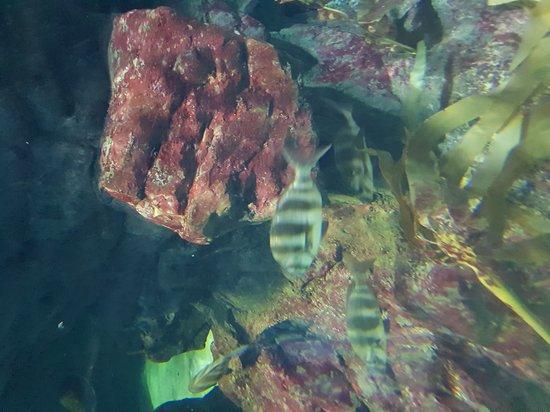 Aquarium Mare Nostrum: 20170712_150058_large.jpg