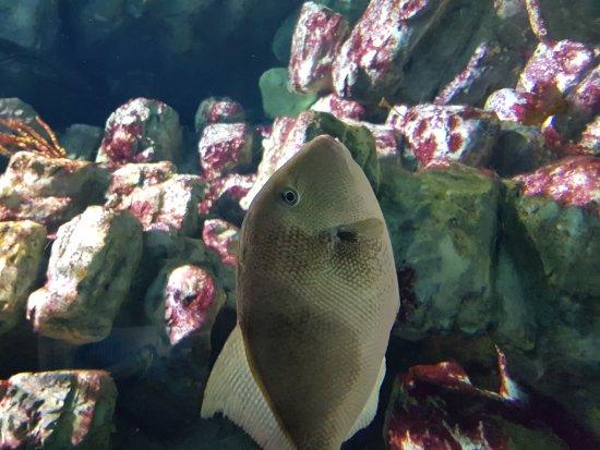 Aquarium Mare Nostrum: 20170712_144454_large.jpg