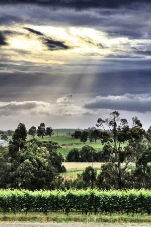 Bilde fra Yarra Valley