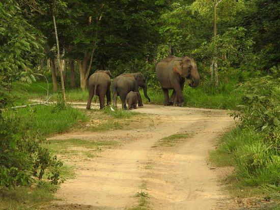 Prachuap Khiri Khan Province, تايلاند: photo0.jpg