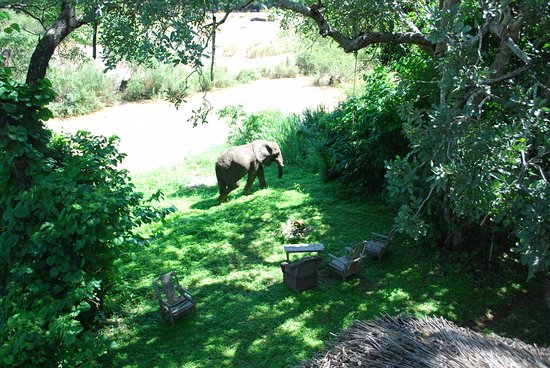 Nkhotakota, Malaui: Local elephant walking through the lodge