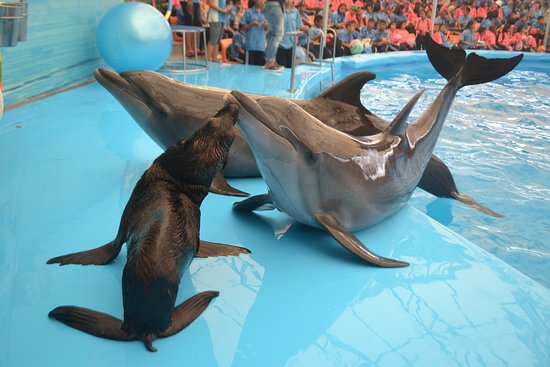 Chalong, Tailândia: Dolphins Bay Nemo Phuket