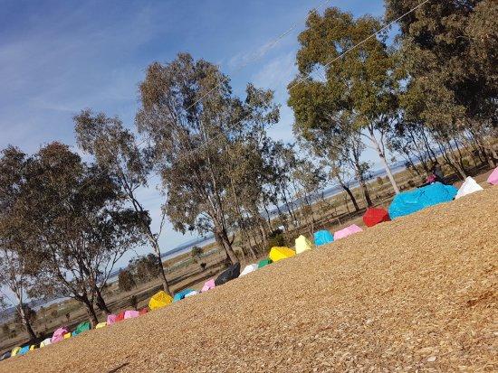 Benalla, Australia: Flying fox