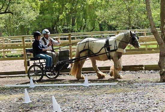 Horse Haven Uk