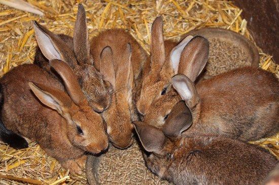 Ferme Pédagogique d'Epaville: Les lapins