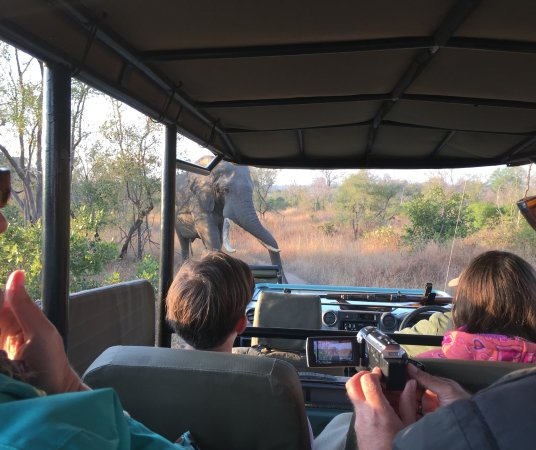 Skukuza, Sudáfrica: Game drives and wildlife experiences