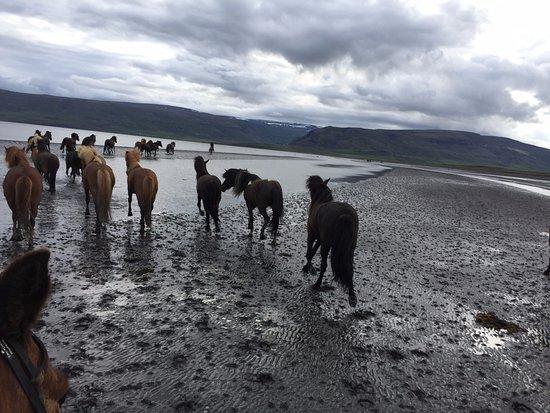 Budardalur, IJsland: Horses on the beach of Hvammsfjörður