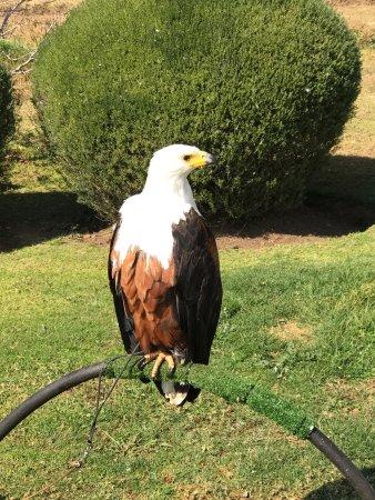 Falcon Ridge Bird of Prey Centre: photo0.jpg