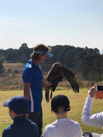 Falcon Ridge Bird of Prey Centre: photo2.jpg