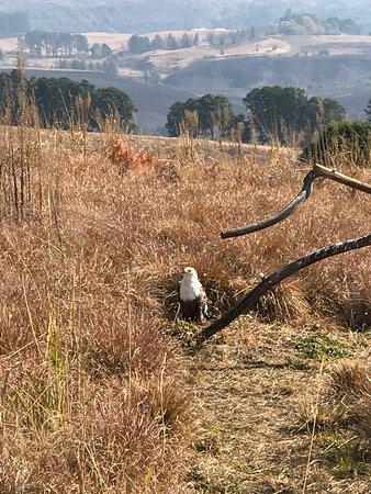 Falcon Ridge Bird of Prey Centre: photo3.jpg