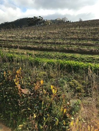 Franschhoek Wine Tram: photo0.jpg