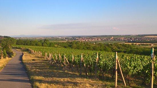 The village Velke Bilovice is surrounded by wine yards