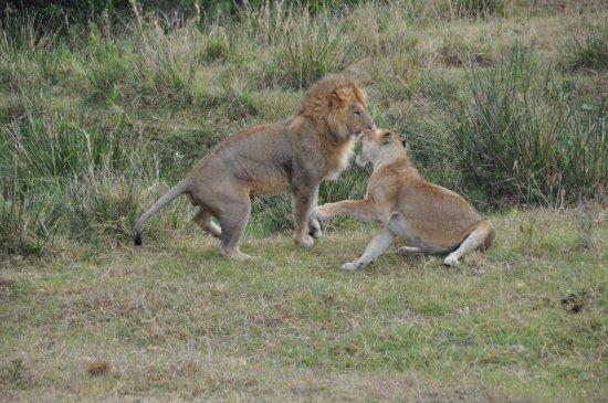 JTS LTD: Massai Mara