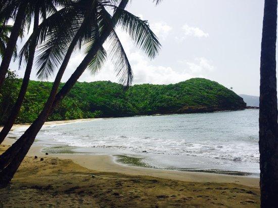 Saint Andrew Parish, Dominica: photo3.jpg