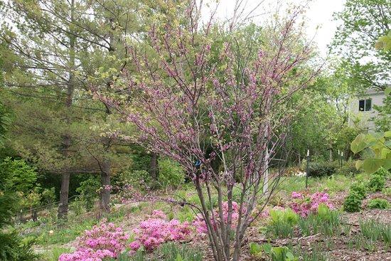 Greater des moines botanical garden ia top tips before - Greater des moines botanical garden ...