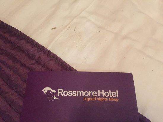 Ilford, UK: Bed bugs etc etc!