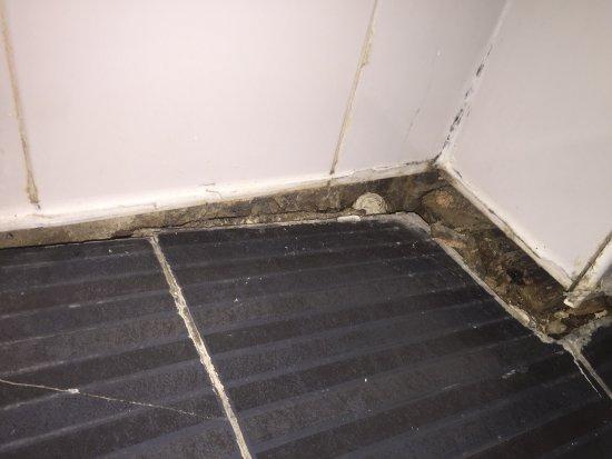 Rossmore Hotel: Bed bugs etc etc!