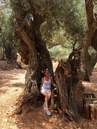 Askos Stone Park (Volimes, Greece): Top Tips Before You Go ...