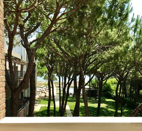 Hotel Mediterraneo: VISTA GIARDINO