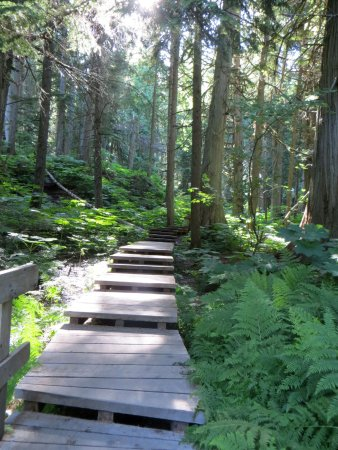 Giant Cedars Boardwalk Trail 사진