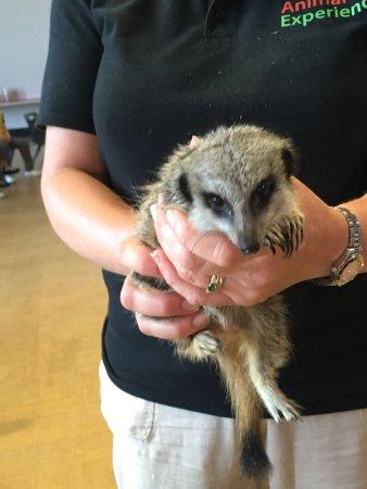 Stretham, UK: The Animal Experience