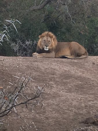 Amakhala Game Reserve, South Africa: photo2.jpg
