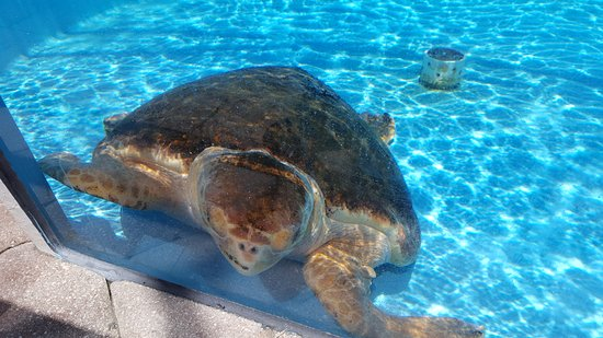 Loggerhead Marinelife Center Turtle Rehab Tank