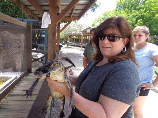 เวสตัน, ฟลอริด้า: Holding baby gator