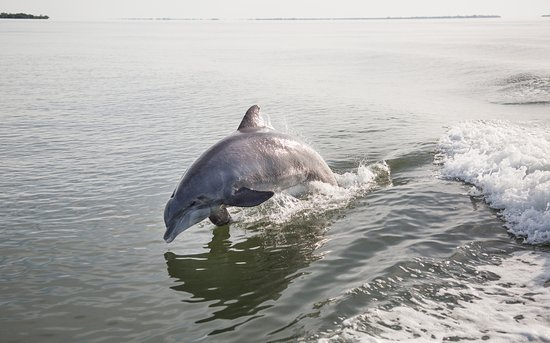 Pineland, Floryda: Dolphin chasing boat
