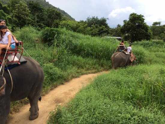 写真Kok Chang Safari Elephant Trekking枚