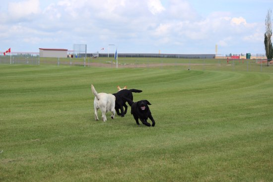 Cold Lake, Kanada: Happy dogs playing at nearby Imperial Oil Center