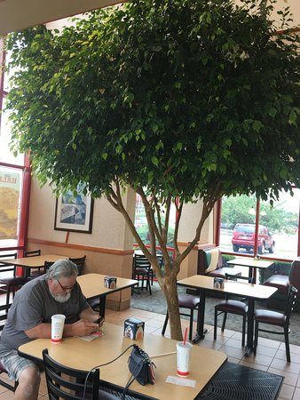 Paw Paw, MI: Living tree inside restaurant