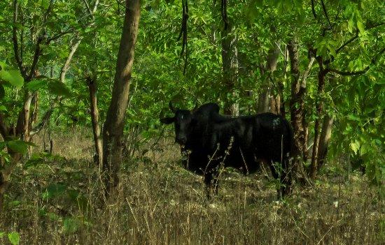 Hanumantiya