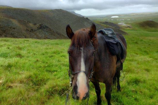 Eld Hestar Horseback Tours: photo1.jpg