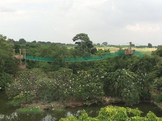 Image result for legon botanical gardens