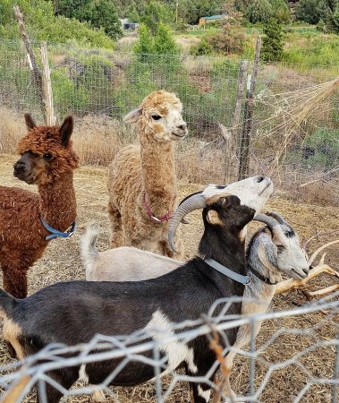 San Cristobal, NM: The sweet animals