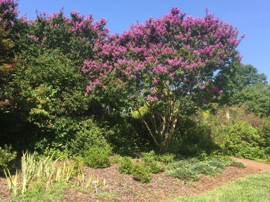 Belmont, Carolina del Nord: photo2.jpg
