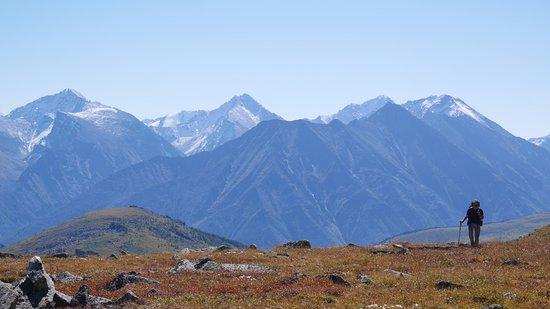 Altai Krai Resmi