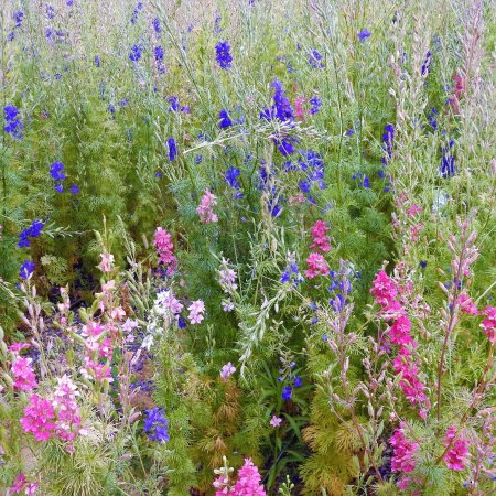 Queen Creek, AZ: Pick your own bouquet!