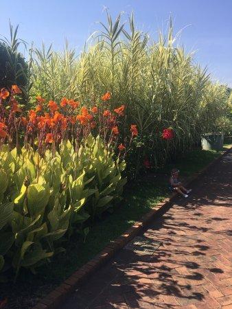 Daniel Stowe Botanical Garden Belmont Nc Top Tips Before You Go Tripadvisor